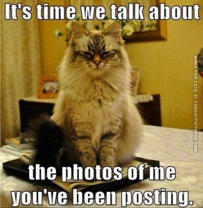 funny-cat-pics-its-time-we-talk-about-the-photos